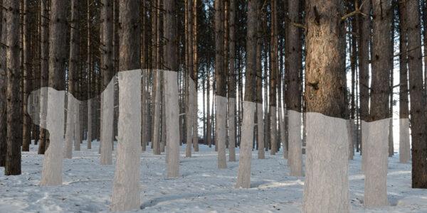 « Abel au bois dormant », Claude Gagné